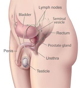 prostatitis és mi jelenik meg